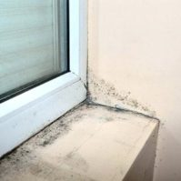 Clean Mold Around Windows and Doors